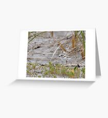 Piping Plover Chick...Hiding in plain sight Greeting Card