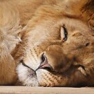 Sleeping King by lloydsjourney
