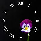 Violet Flower White Roman Numbers Wall Clock by Alan Harman