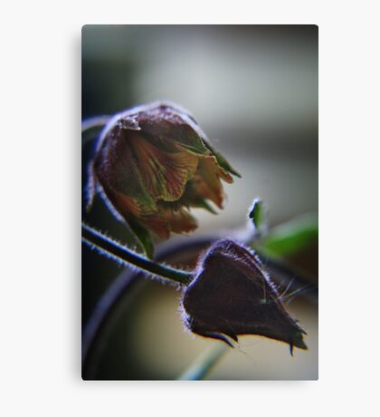 Nature sexy (from wild flowers collection) Canvas Print