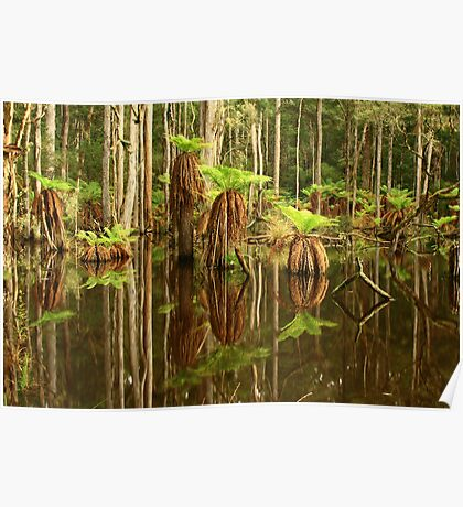 Sisters Creek at Myalla , Nor West Tasmania , Australia Poster