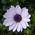 Beautiful Flower by Sunil Bhardwaj