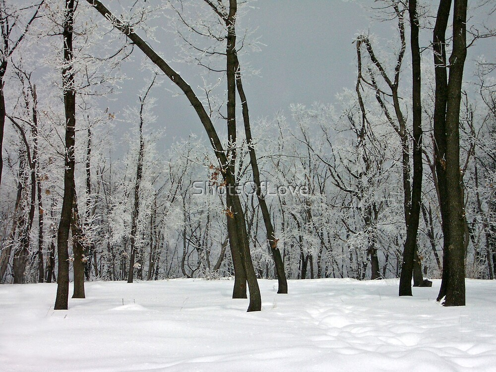 Crystallized trees in snowy Dobogókő, Hungary by ShotsOfLove