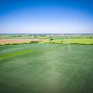 Aerial view of high voltage line over field of green grain by Lukasz Szczepanski