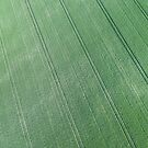 Aerial view of green field of grain by Lukasz Szczepanski