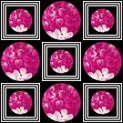 Pink hydrangeas on black background by Joan Harrison