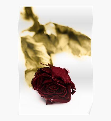 Lifeless Bloom Poster