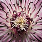 Clematis Heart by Jane-in-Colour