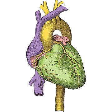 Human Heart - Victorian Illustration by gifrancis