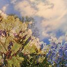 Cattus Island   /  Flowering Trees    by fiat777