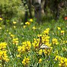 Nature in Yellow by Jody Johnson