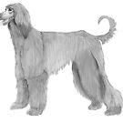 Afghan hound by doggyshop