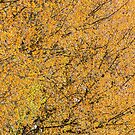 Spring leaves in the afternoon sunshine by DaleReynolds