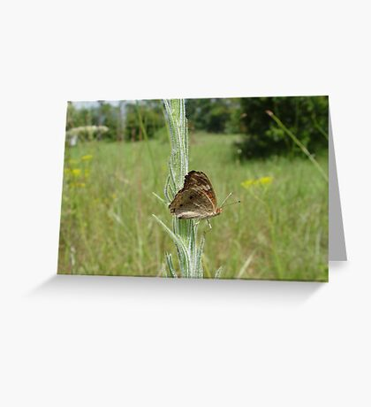 West Indian Buckey Greeting Card