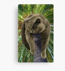 How Did I Get Up Here, and Now, How Do I Get Down?  Canvas Print