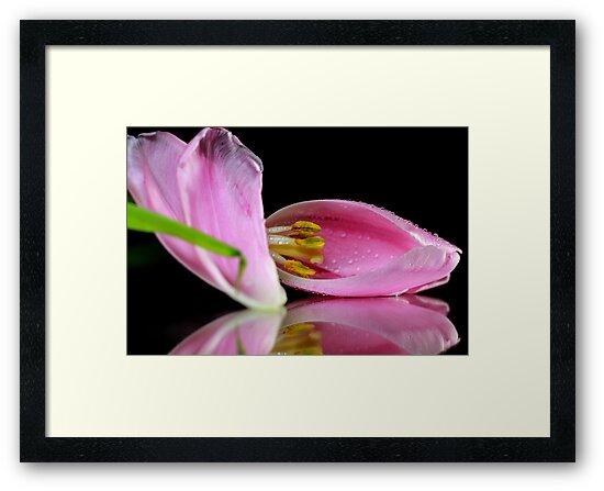 Tulips by ikshvaku