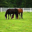Horses by ikshvaku