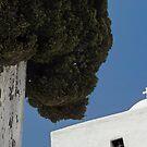 Cypress tree and Greek church--Santorini by milton ginos