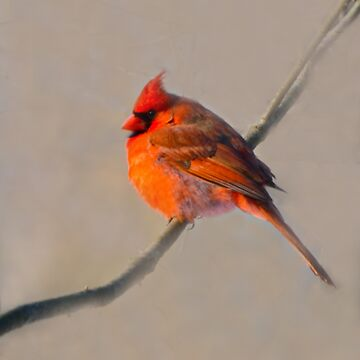 Cardinal -Go Out On A Limb  by ginawaltersdorf