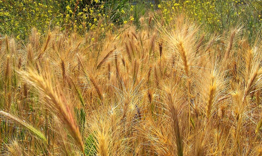 wheat weeds by Jimmy Joe