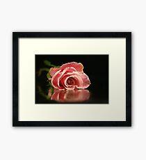Pink rose. Framed Print