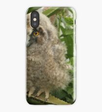 young Long-eared Owl (Asio otus) Israel Spring April  iPhone Case
