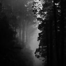 The Black Spur by Donovan Wilson
