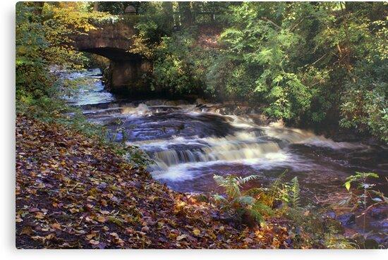 River Fenwick by Jane-in-Colour