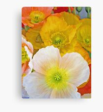 Papery Poppies Canvas Print