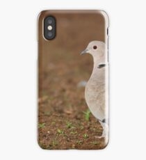 Eurasian Collared Dove, Streptopelia decaocto Israel Autumn  iPhone Case