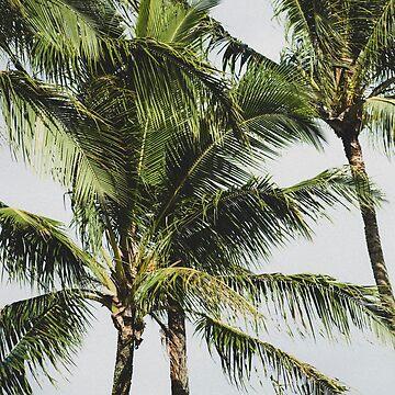 Hawaiian Palm Trees by GlideMedia
