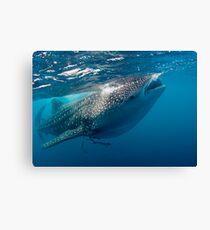 Whaleshark Canvas Print