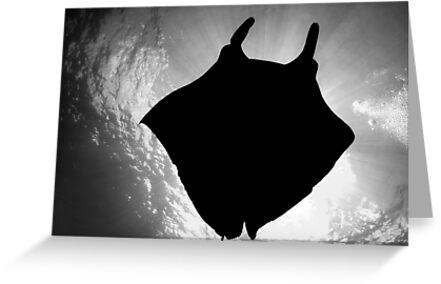 Manta Silhouette B&W by MattTworkowski
