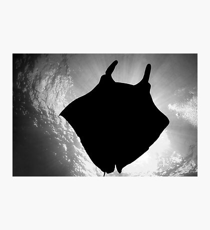 Manta Silhouette B&W Photographic Print
