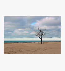 A tree by the lake. Photographic Print