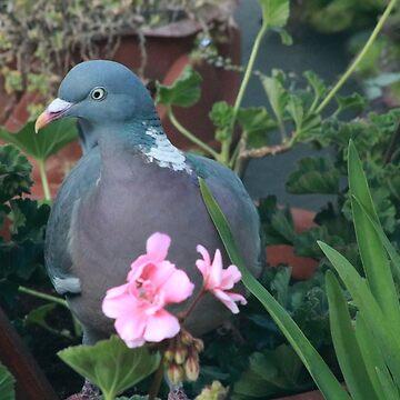 Pigeon and begonias - image 1 by missmoneypenny