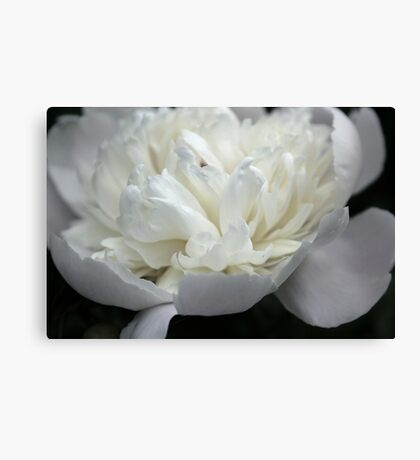 White and Black in Living Color Canvas Print