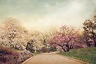 Magnolia Lane by Jessica Jenney