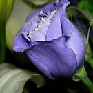 Blueish-Purple by debbiedoda