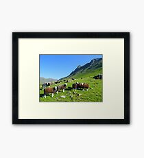 The Lake District: Herdwick Sheep & The Langdales. Framed Print