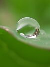 droplet on green by millymuso