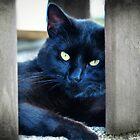 Little Black Kitty by FrankieCat