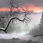 Winter Trees by Igor Zenin