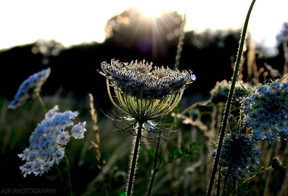 Sun ray flower by AJPPhotography