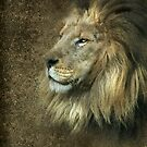 The Lions Pride by Kimberly Palmer