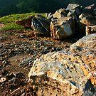 Rock Steady by AJPPhotography
