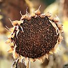 Slouching Sunflower by Meigel Art