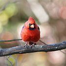 Northern Cardinal by Linda Crockett