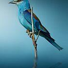 Blue Bird by Cliff Vestergaard