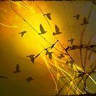 Birds Through the Toxic Dust by Scott Mitchell